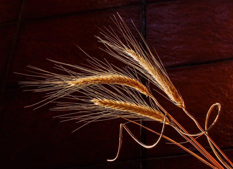 Some barley