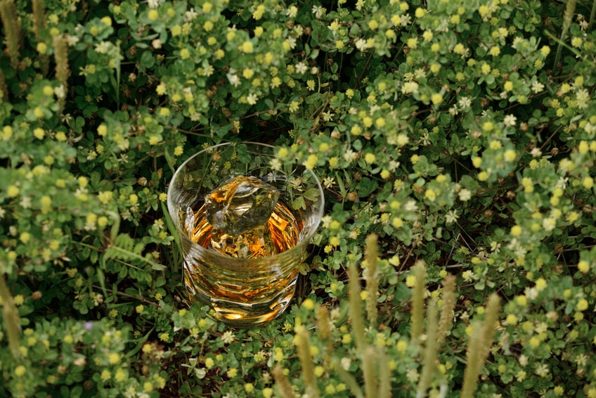 Whisky in a glass on top of plants